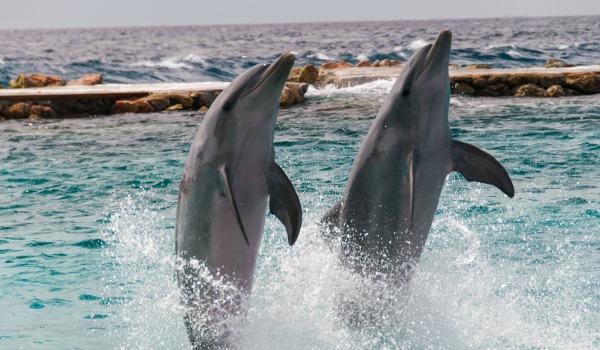 600x350-Curacao-dolfeinen