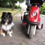 De hond mee op vakantie naast scootmobiel